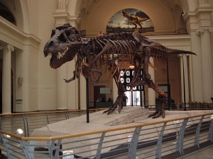 SUE the T-Rex at The Field Museum. Photo by mrkathika via Flickr.